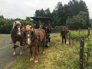 Pat Prather explains the business of growing grapes